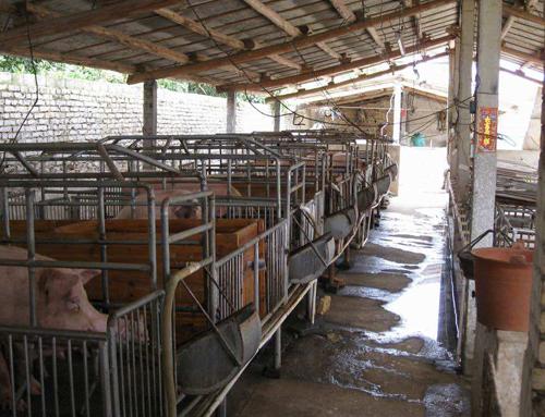 山东某养猪场